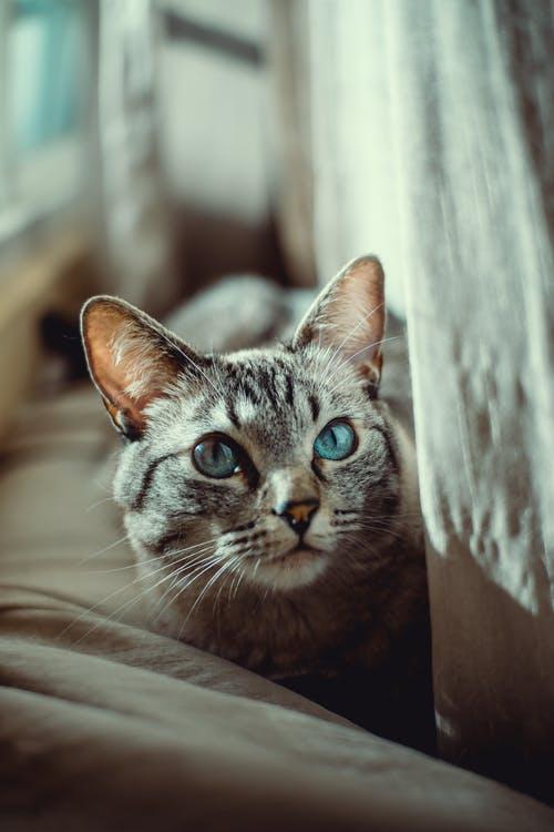 صورة كنت بخاف منها بس بعد ما شوفت صورتها حبيتها جدا , صور قطط متحركة 2197