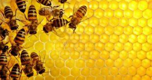 معلومات عن النحل وفوائده